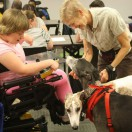 Girl in powerchair is petting therapy dogs.